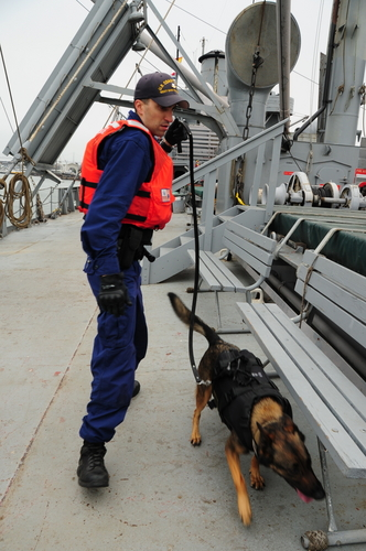 Petty Officer 2nd Class CH and Evy, a military working dog, conduct explosive detection training in San Francisco. U.S. Coast Guard photo by Petty Officer 2nd Class PB